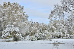 Winter landscape of park after the first snowfall Royalty Free Stock Image