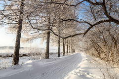 Winter landscape in the Park with hoar frost on trees, Russia, the Urals Royalty Free Stock Photo
