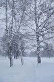 Winter landscape in a park. Photo of winter landscape during a snowfall in a park Stock Photos