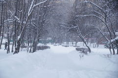 Winter landscape in a park. Photo of winter landscape during a snowfall in a park Royalty Free Stock Photo