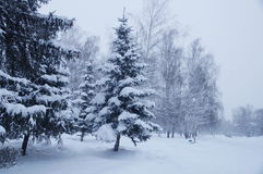 Winter landscape in a park. Photo of winter landscape during a snowfall in a park Royalty Free Stock Photos