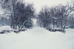 Winter landscape in a park. Photo of winter landscape during a snowfall in a park Stock Photography