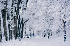 Winter landscape in park. Scenery of a alley in park in winter time Royalty Free Stock Image