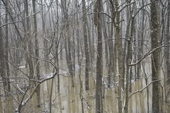 Winter landscape in with a flooded river stock image