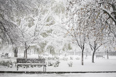 Winter landscape in the park stock image
