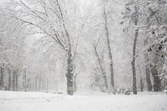 Winter landscape in the park Stock Photos