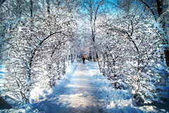 Winter landscape in the Park. Snowy landscape in the park covered with snow and blue sky background Royalty Free Stock Photos
