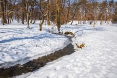 Winter landscape  in the park. Winter landscape in the park in Europe Royalty Free Stock Photography