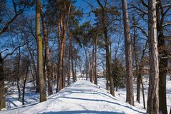 Winter landscape  in the park Royalty Free Stock Photos