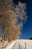 Winter landscape with path and birch Royalty Free Stock Image