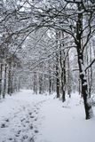 winter landscape - path in snowy forest Royalty Free Stock Image