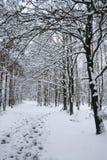 Winter landscape - path in snowy forest. Winter scenery - path in snowy forest Royalty Free Stock Image