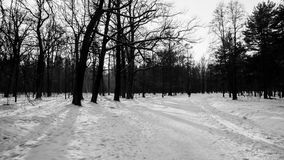 Winter landscape. In the Peterhof stock images