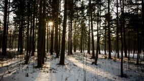 Winter landscape. In the Peterhof Stock Photo