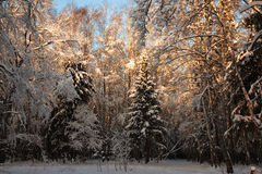 Winter landscape. The photo shows the winter landscape Royalty Free Stock Photography