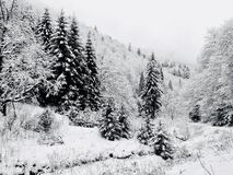 Winter landscape in Piatra Craiului National Park. A lot of snow covering the entire landscape stock photos