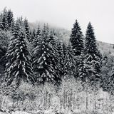 Winter landscape in Piatra Craiului National Park. A lot of snow covering the entire landscape royalty free stock image