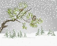 Winter landscape pine branches and cones needles and snow nature background vintage vector botanical illustration for design. Editable hand draw Stock Photo