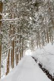 Winter Landscape of Pine Forest royalty free stock photo