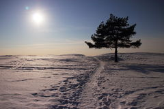 Winter landscape with pine. And the path to the beach Stock Images