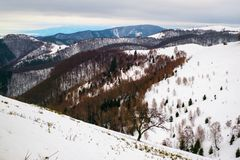 Winter landscape with pine tree and birch. Top view, Paltinis area, Sibiu county, Romania royalty free stock photo