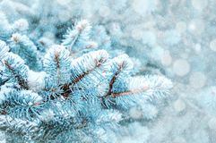 Winter landscape. Pine tree branches under winter snowfall, closeup of winter forest nature, free space for text stock images