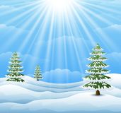 Winter landscape with pine tree and sunlight background Royalty Free Stock Images