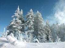 Winter landscape with pine trees. Snow covered pine trees, blue sky and fresh snow, shot in the mountains Stock Image