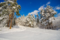 Winter landscape of pine trees and a big hat snow and blue sky Royalty Free Stock Photography