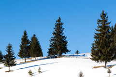 Winter landscape with pine trees Stock Photos