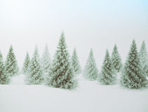 Winter landscape. Pine trees and snow. Winter scene with green pine trees and snow Royalty Free Stock Photography