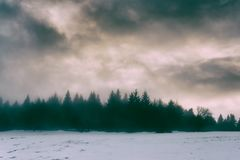 Winter landscape with pines. And dramatic sky stock photo