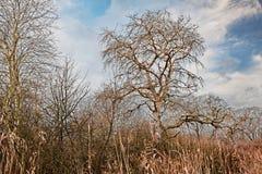 Winter landscape in Po Delta Park, Emilia Romagna, Italy Stock Photography