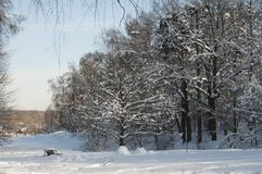 Winter landscape with a pond Stock Photos