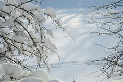 Winter landscape with a pond Stock Image