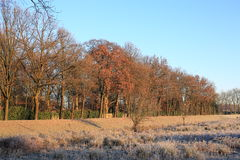 Winter landscape in the Province Limburg, The Netherlands Stock Images