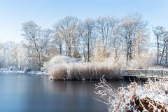 Winter landscape with reed and bridge over frozen lake covered in snow. Reed on the lakeside of a frozen pond is covered with thin layer of freshly fallen snow Royalty Free Stock Photo
