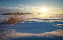 Winter landscape with reeds, frozen lake and sunset sky. Stock Photos