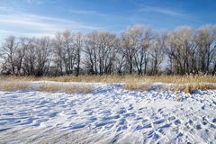 Winter landscape with reeds, trees Stock Photo