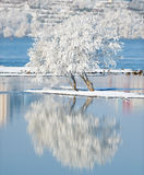 Winter landscape with reflection in the water Stock Photo