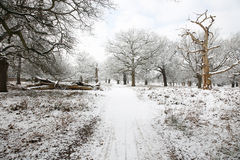 Winter landscape of Richmond Park Royalty Free Stock Photos