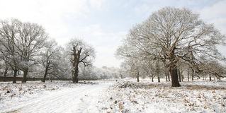 Winter landscape of Richmond Park Stock Photography
