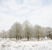 Winter landscape of Richmond Park Stock Images