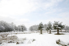 Winter landscape of Richmond Park Royalty Free Stock Photo