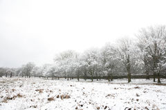 Winter landscape of Richmond Park Stock Photos