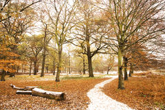 Winter landscape of Richmond Park Stock Photo