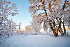 Winter Landscape. Rime on trees. Royalty Free Stock Photography