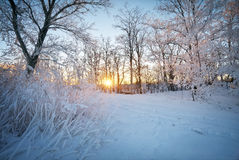 Winter Landscape. Rime on trees. Royalty Free Stock Photo