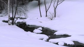 Winter landscape with birch. Winter landscape. River birch and snow stock video