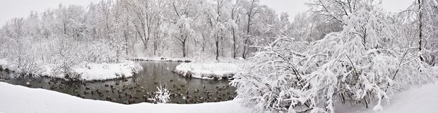 Winter landscape with river and ducks in park Stock Photography
